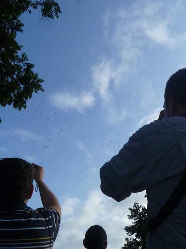 Gira y migración