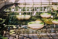 (nijntjee) Tags: film 35mm pentax takumar spotmatic botanicalgardens glasshouse sp2 kodakgold