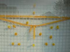 1467 (en-ri) Tags: pulcini giallo nastro sony sonysti griglia vetrina