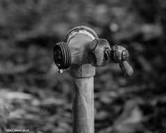 Water Spigot (that_damn_duck) Tags: blackandwhite monochrome waterdrop pipe waterspigot outdoorplumbing