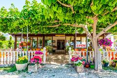 Liza's Place (George Plakides) Tags: lizasplace restaurant teverna argaka food tourist tourism shade leaves flowers sycamore tree