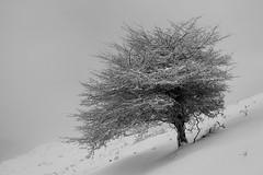 (iban pagalday) Tags: nikon nieve natura montaa 2009 euskalherria elurra araba mendia zuhaitza d40 laudio elorritxugane