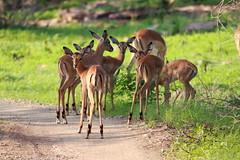 Impala Day Care