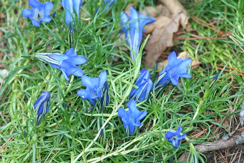 20090919 Edinburgh 20 Royal Botanic Garden 500