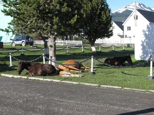 PW horses