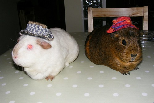 Pigs in ska hats