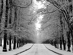 Lime Tree Avenue, Clumber Park (DaveKav) Tags: road uk greatbritain schnee winter england white snow cold unitedkingdom britain snowy hiver freezing olympus gb neige icy avenue nationaltrust nottinghamshire 2010 deepfreeze clumber e510 clumberpark fourthirds bigfreeze limetreeavenue thebigfreeze january2010 frozenbritain