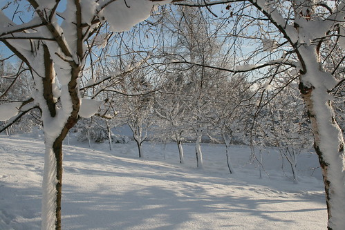 Soft light and snow 2