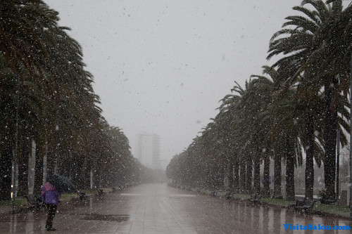 Nieve en el Paseo Jaime I de Salou