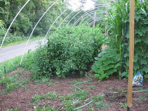 Front of 2009 garden