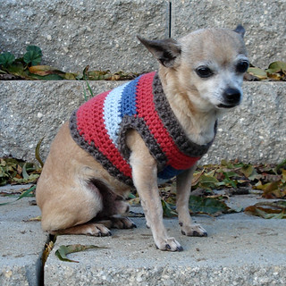 Ravelry Cropped Dog Sweater Chihuahua 6 7 8 Lbs Pattern By