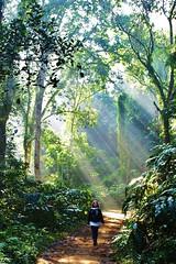 Rainforest, Lowacherra National Park, Srimongal (shaun shooter) Tags: nature landscape landscapes rainforest country views srimongal natureviews lowacherranationalpark