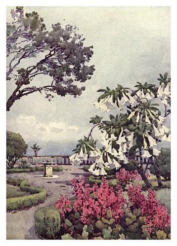 004-Arbusto de Datura en Quinta Vigia Madeira-The flowers and gardens of Madeira - Du Cane Florence 1909