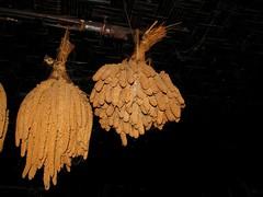 drying sorghum (Linda DV) Tags: people sorghum tribe 2008 sevensisters tribo stam nagaland tribu stamm  trib trib 7sisters heimo northeastindia stamme pokolenia   lindadevolder  plemena pokolen