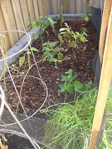 Vegie Garden