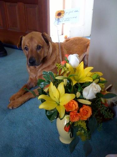 Timo met zn bloemen