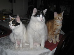 We want dinner, NOW! Meow?! (chibiko1) Tags: cats kittens kitties
