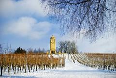 Pastoral symphony with a wintery touch (solitude.in.the.world) Tags: winter tower field germany deutschland vineyard feld bismarck pastoral turm konstanz constance weingut bismarckturm