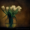 Mother's Bouquet (fesign) Tags: flowers stilllife tulips vase bunchofflowers infinestyle —obramaestra— magicunicornvereybest
