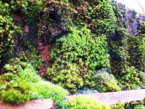 mossy bricks