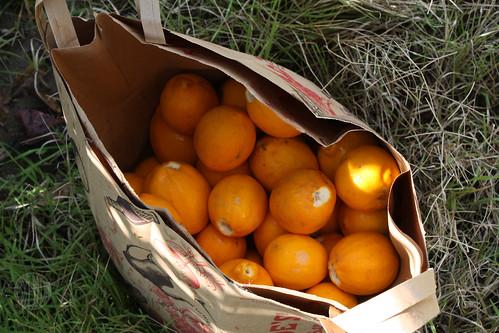 bag o' lemons
