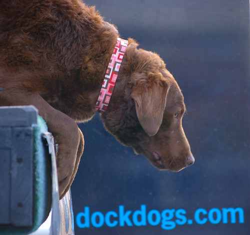 DockDogs Competition in Charleston at the Southeastern Wildlife Expo 2010