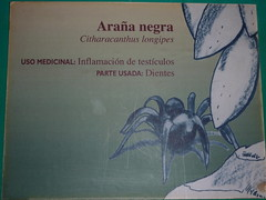 The Museum of Mayan Medicine - one of their medicines - spider venom for inflammed testicles.