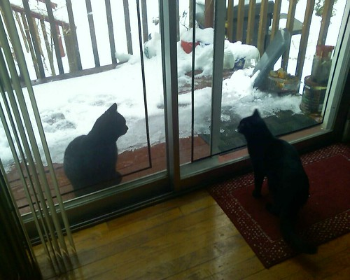 So my cat has a new black boyfriend. Alas, glass separates them.