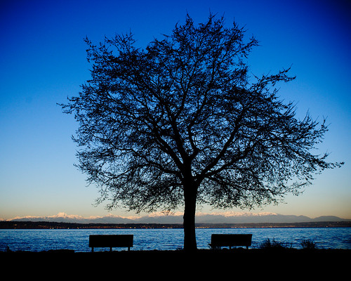 Golden Gardens Tree
