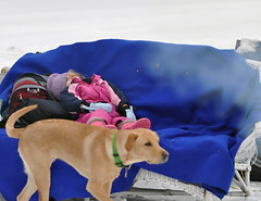 Crashed Out (MelissaReed) Tags: dog snow child frozenlake