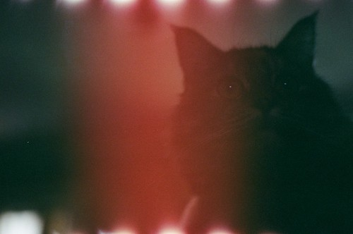Gracie + Light Leak