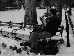 Hitchcock (Tim Schreier) Tags: nyc man manhattan washingtonsquarepark pigeons 10012 gothamist greenwichvillage birdman washingtonsqpark