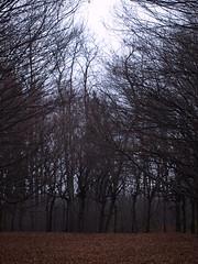 Vanzago (Ivan click 1972) Tags: natura vanzago boschi