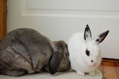 Rabbit Rabbit by Justin and Elise, on Flickr