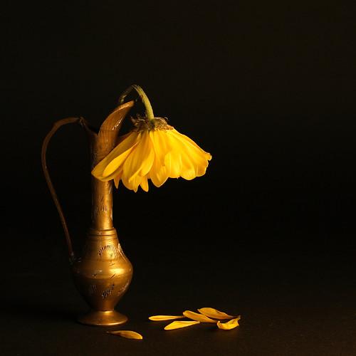Fleur Fanee Quot Poemes Pour Ceux Qui Aiment Quot Ou Ont Aime