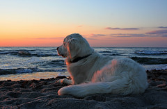Summer pleasures (Ingrid0804) Tags: sunset sea summer sky dog beach goldenretriever denmark happy peaceful happiness delight serene breathtaking summerevening kattegat coth summerbreezemakesmefeelfine vob supershot summerpleasures roervig odsherred breathtakinggoldaward 100commentgroup virtualjourney saariysqualitypictures breathtakinghalloffame