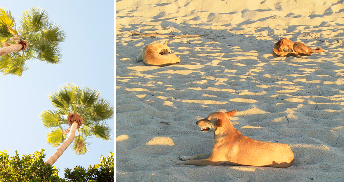 Beach Doggies & Palm Trees