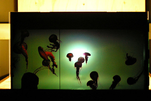 GraGra - digital art in Kyoto