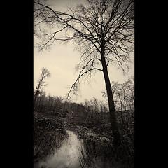 on the death way (CDR.onair) Tags: trees winter bw black france nature landscape noiretblanc hiver nb arbres paysage campagne champ noirblanc desat desatur fujis5pro grandsespaces