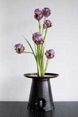 Ikebana with one material, irises (Otomodachi) Tags: flowers iris japan japanese ikebana container copper bloemen irises flowerarrangement koper japans bloemschikken japaneseflowerarrangement irissen