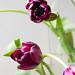 1003 flowers #2