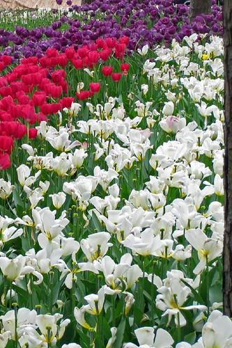 Garvin Woodland Gardens 13