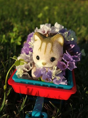 Lovin' flowers
