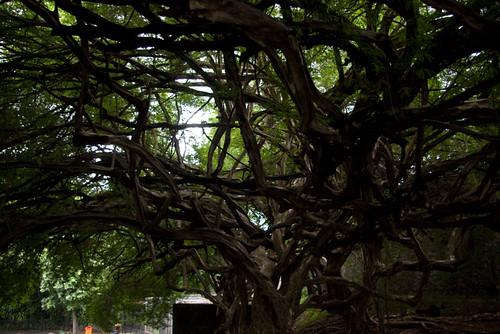 Rio Zoo - Tree
