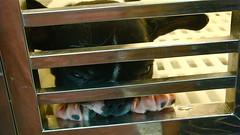 wishful gaze (wongyokeseong) Tags: street dog pet water puppy french hongkong goldfish district sony bulldog frenchbulldog 香港 kowloon mongkok petshop 九龍 spinach t200 旺角 waterspinach tungchoistreet 通菜街 九龙 goldfishstreet 金魚街 tungchoist yautsimmong sonydsct200 dsct200 sonyt200 yautsimmongdistrict 油尖旺 gamyu monggok wonggok 油尖旺區 gamyustreet waterspinachstreet kownloonpenisular