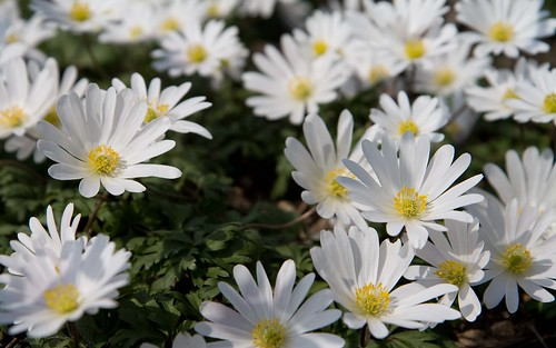 montisfont flowers4