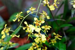 baudchon-baluchon-mindo-orchidees-13