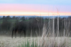 Horse Wales @  Castell-Mai (seegarysphotos) Tags: sunset sky horse grass wales north hazy blured caernarfon castellmai