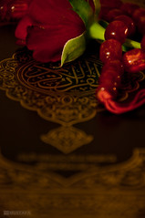 The Holy book - AlQuran (MUSTAFASOD) Tags: red rose book nikon islam religion holy cover muslims dslr  allah quran chaplet   d90 sobha