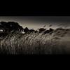 home in the reeds (s k o o v) Tags: bw nature monochrome lensbaby reeds dark square dof antique oldhouse guernsey composer skoov